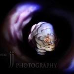jjphoto